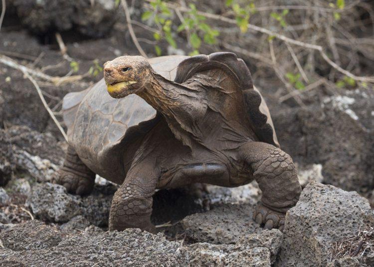 Słynny żółw Diego